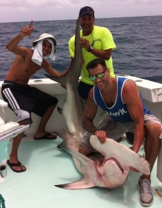 Hammer Head Shark - - Miami Fishing Charters Spellbound