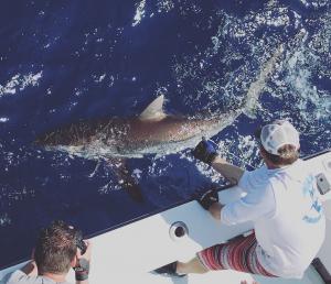 Shark Fishing Miami